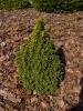 Отсыпка из коры Сибирской лиственницы :: Кора_3