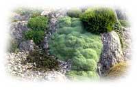 Ландшафтный дизайн: Альпийская горка